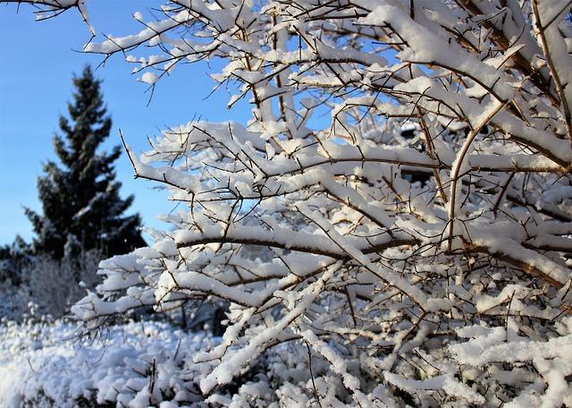 Strom v zime.jpg